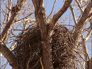 Bald Eagles Return To Tulsa Area