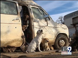 Donations Help Woman with 100 Abandoned Dogs