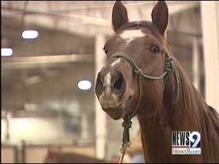Rodeos Bullied By Higher Costs