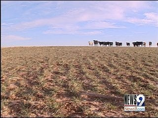 Farmers Anxious for Rainfall as Fields Wilt