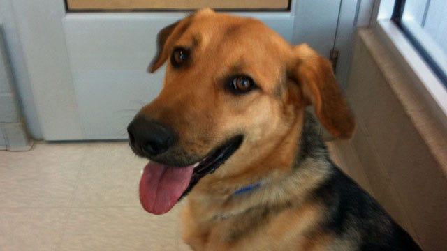 Dog Abandoned Outside Edmond Animal Shelter Still Needs Home