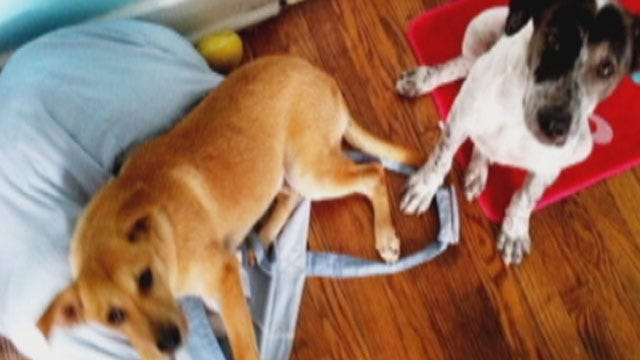 Apparent Animal Adoption Scam Threatens Two Puppies' Lives
