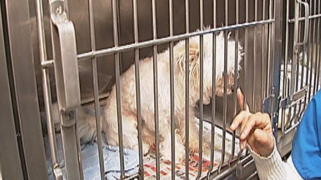 Puppy Mill Bill Faces Another Last-Minute Challenge