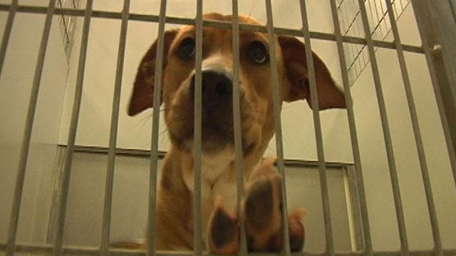 Less Adoptions, More Dogs at Edmond Animal Shelter