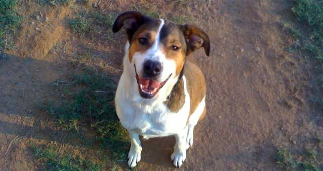 Happy Endings For Two Lost Oklahoma Dogs