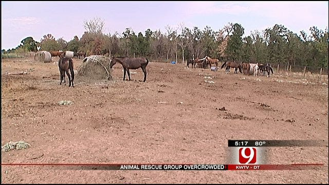 No Hay, No Adoptions, No Room At Horse Rescue Barn