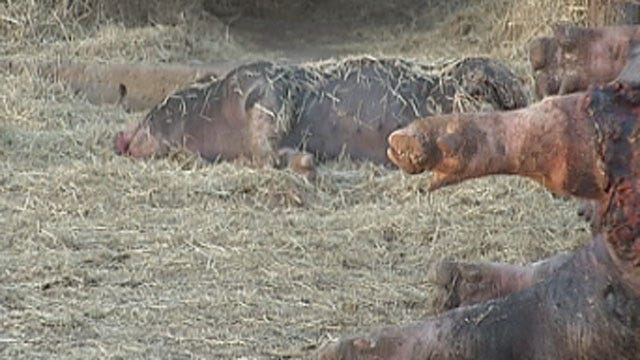 Cleveland County Homeowners Say Neighbor's Dogs Killed Their Livestock