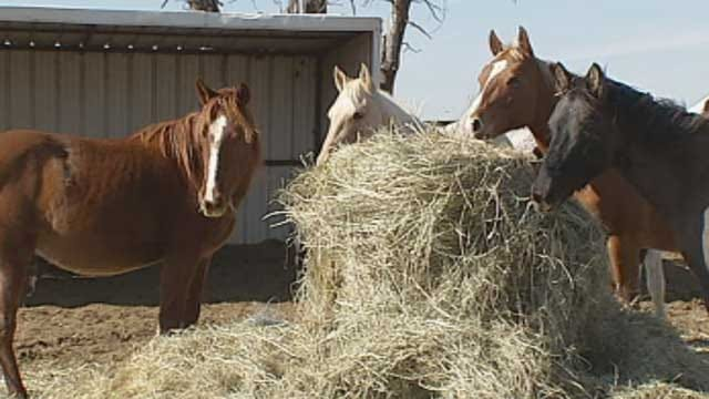 Horse Rescue Group In Jones Needs Donations, Families To Adopt