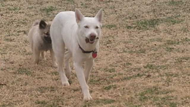Police Investigate Dognapping Case In Forest Park