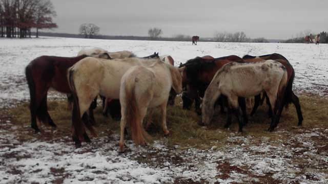 Abused Horses Removed From Logan County Property