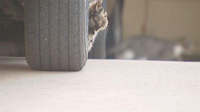 Feral Cats Invade Southwest OKC Neighborhood, Homeowners Upset