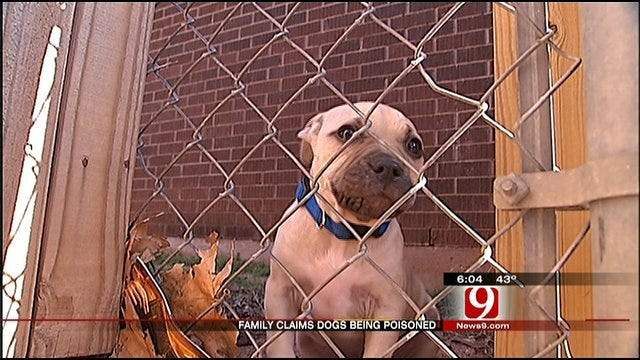Del City Families Believe Dogs Are Being Deliberately Poisoned