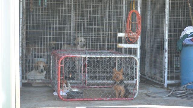 Sulphur Animal Shelter Under Fire For Alleged Animal Cruelty