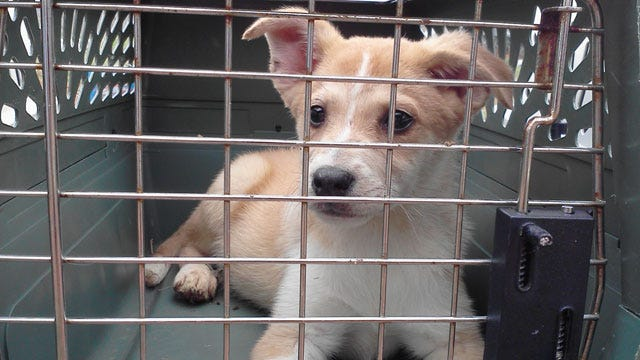 Dogs Saved From McClain County Puppy Mill Up For Adoption At Humane Society