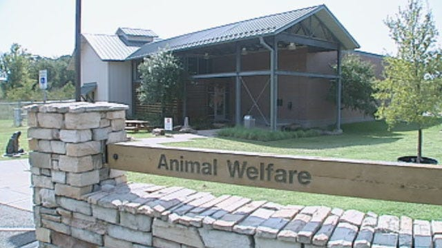 Edmond Animal Shelter At Capacity