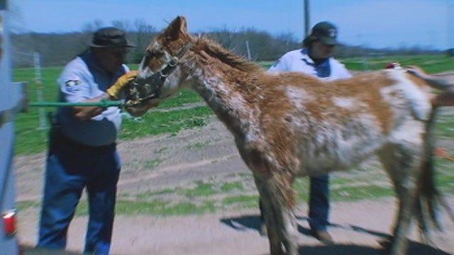 Seminole County Deputies: Worst Case Of Animal Abuse We've Ever Seen