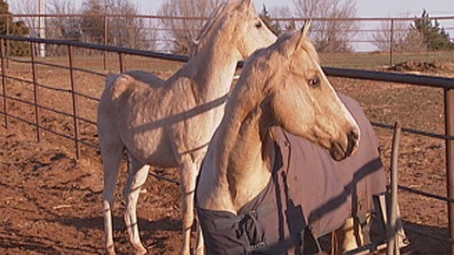 New Bill Would Allow Horse Meat Processing In Oklahoma