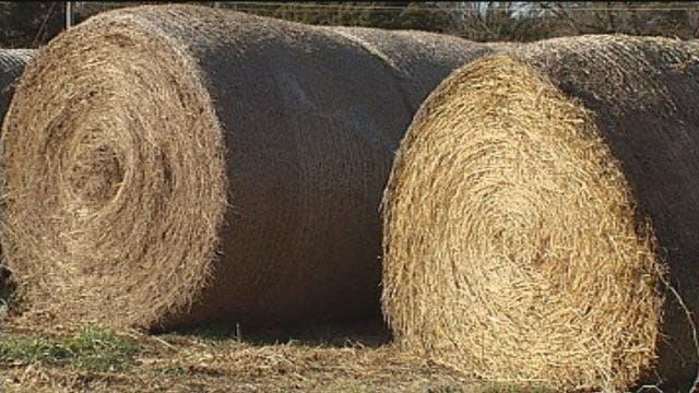 Bad Oklahoma Drought Leads To Spike In Hay Thefts