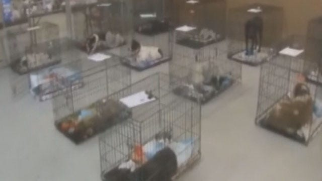 Animals Rescued Before OK Storms Sent To Florida Shelter Due To Overcrowding