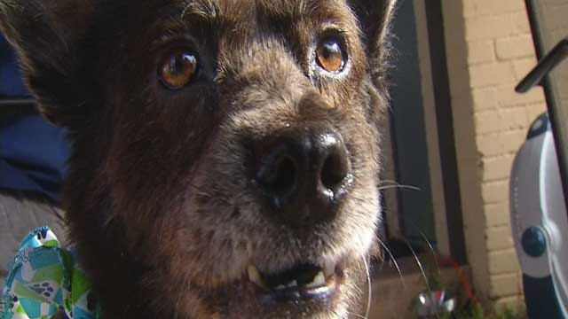 Red Dirt Diaries: Passion For Pooches Turns Underdogs To Lucky Dogs