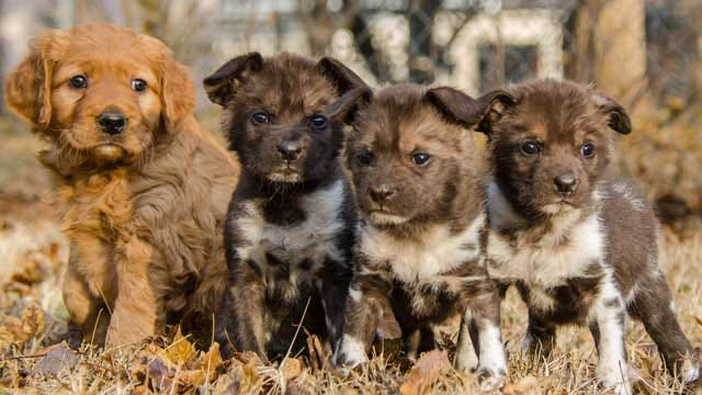 OKC Zoo's Wild African Dog Pups Have Names