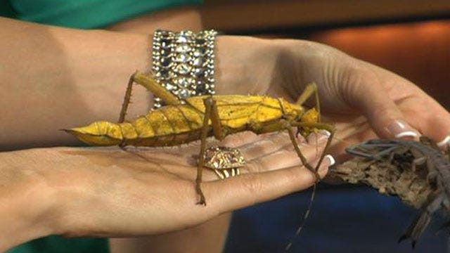 Giant Insects Invade H&8th Night Market Friday Night