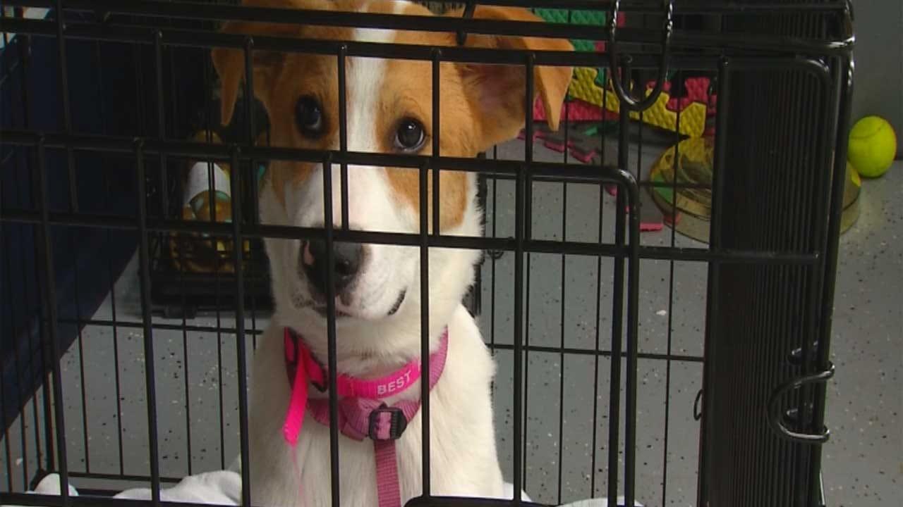 Bill Aims To Keep Animal Rights Donation Dollars In Oklahoma