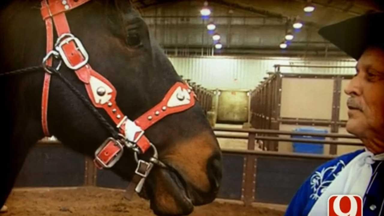 Hurricane Katrina Survivor Becomes Top Trick Horse
