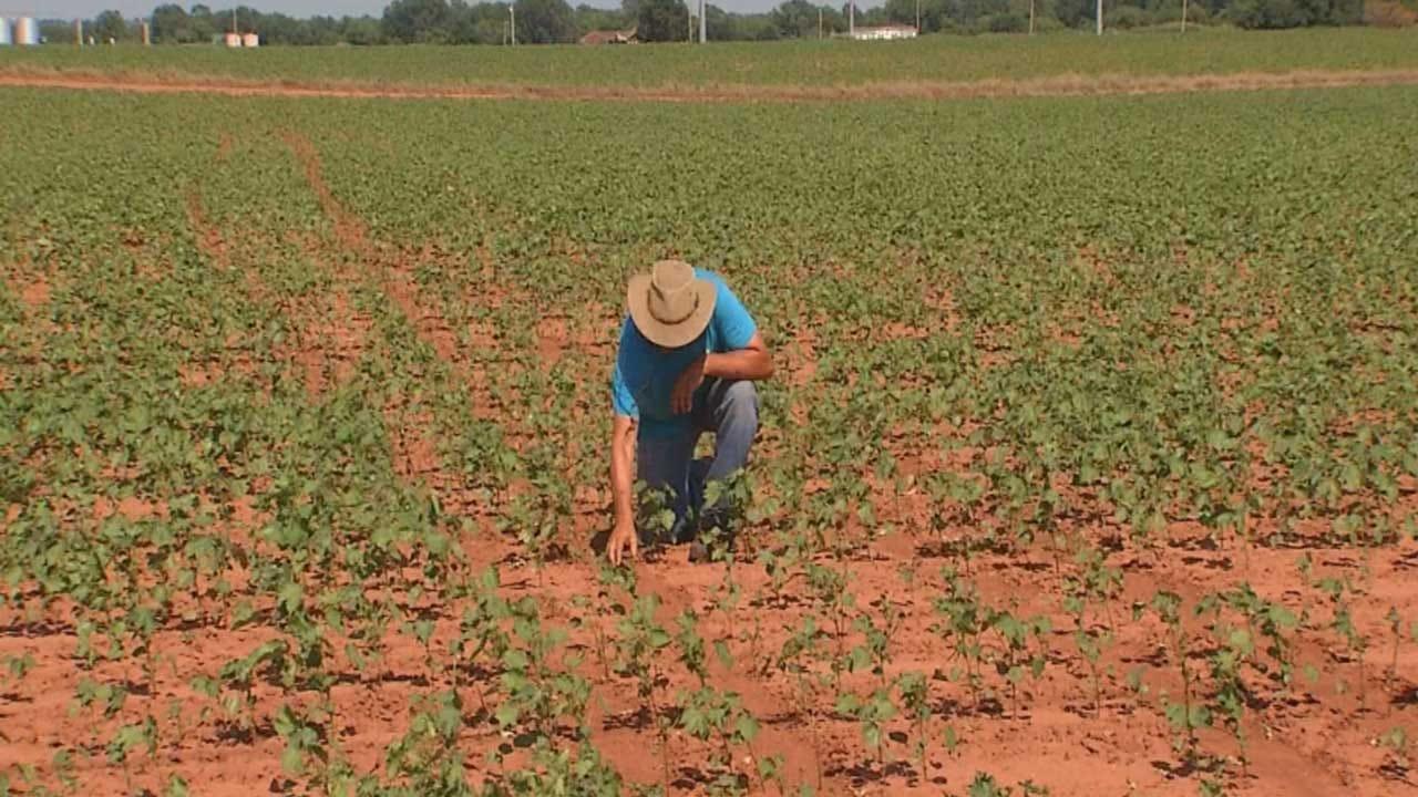 Farmer's Crops Damaged In Grady County Police Pursuit