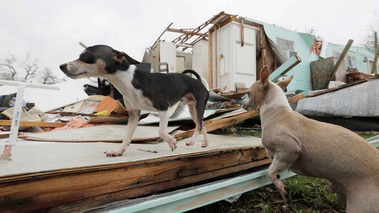 Animal Shelters Filling Up With Pets In Harvey's Wake