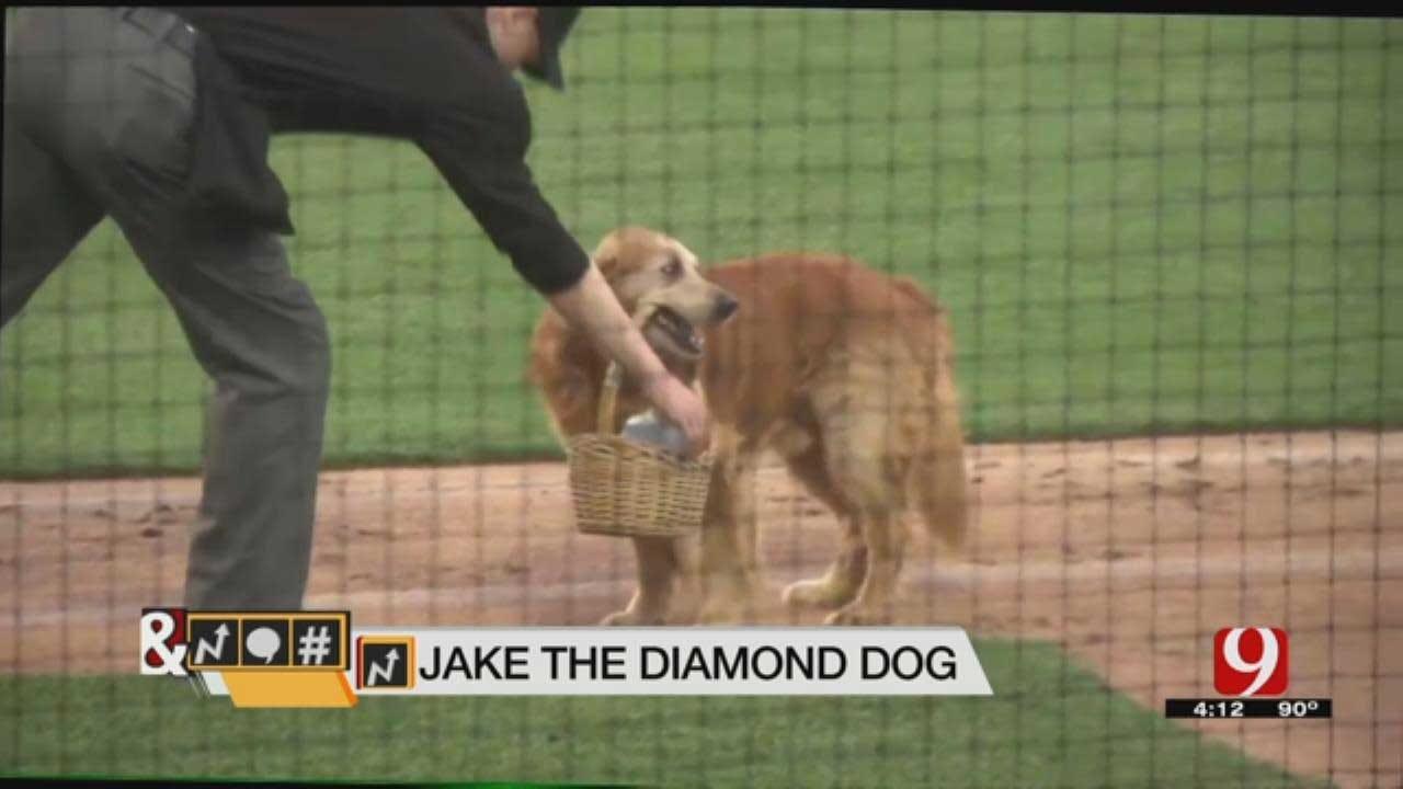 Trends, Topics & Tags: Jake 'The Diamond Dog'