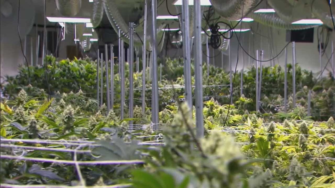 New Draft Of State Medical Marijuana Emergency Rules Posted