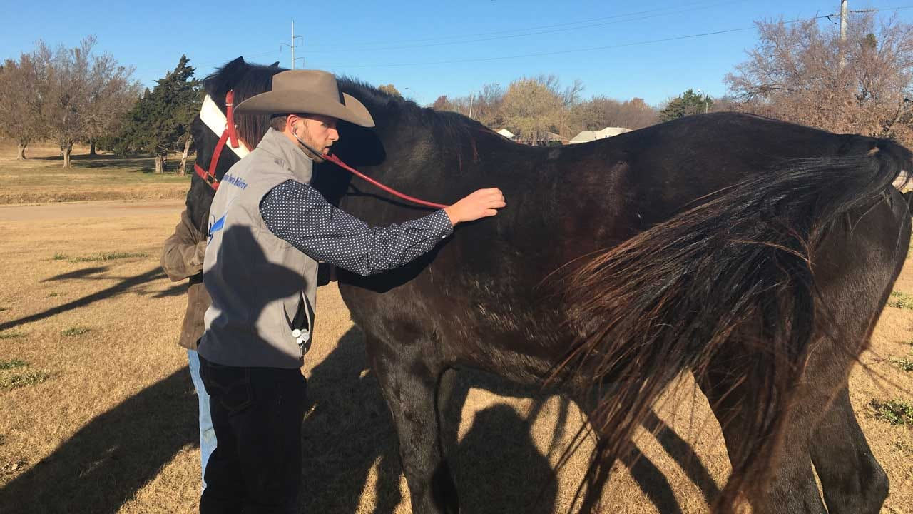 Horses Injured In OKC Rollover Crash Find Help At NRHA Futurity