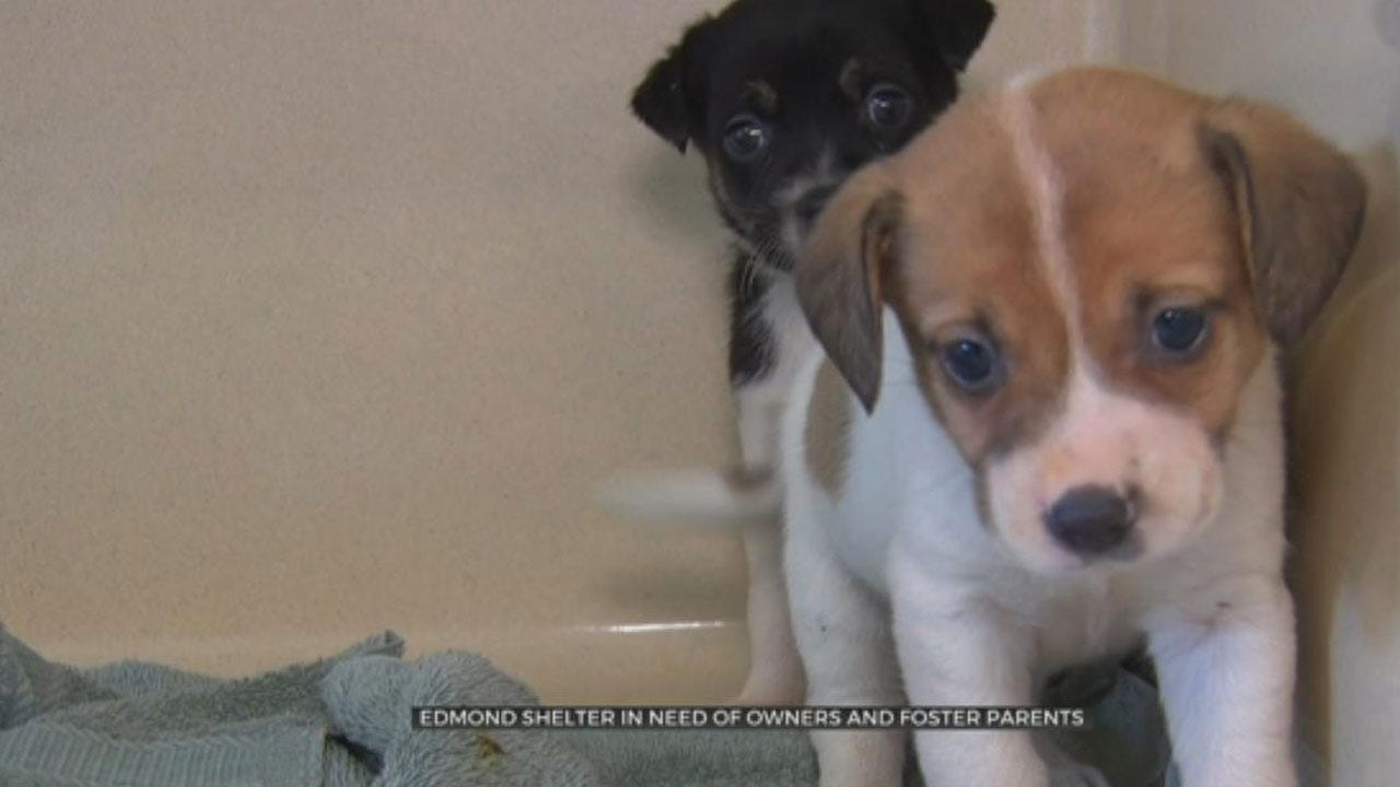 Edmond Animal Shelter In Need Of Owners, Foster Parents