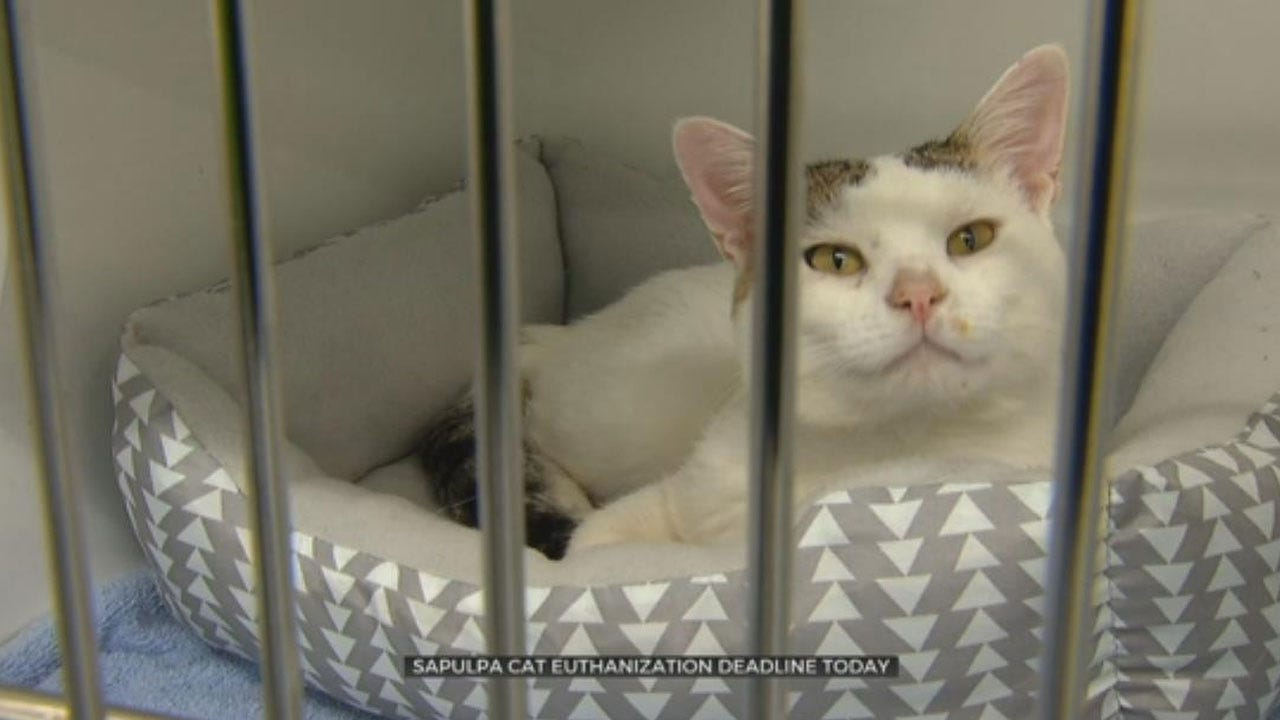 Deadline Approaching For Sapulpa Animal Rescue Group To Find Cat Foster Homes