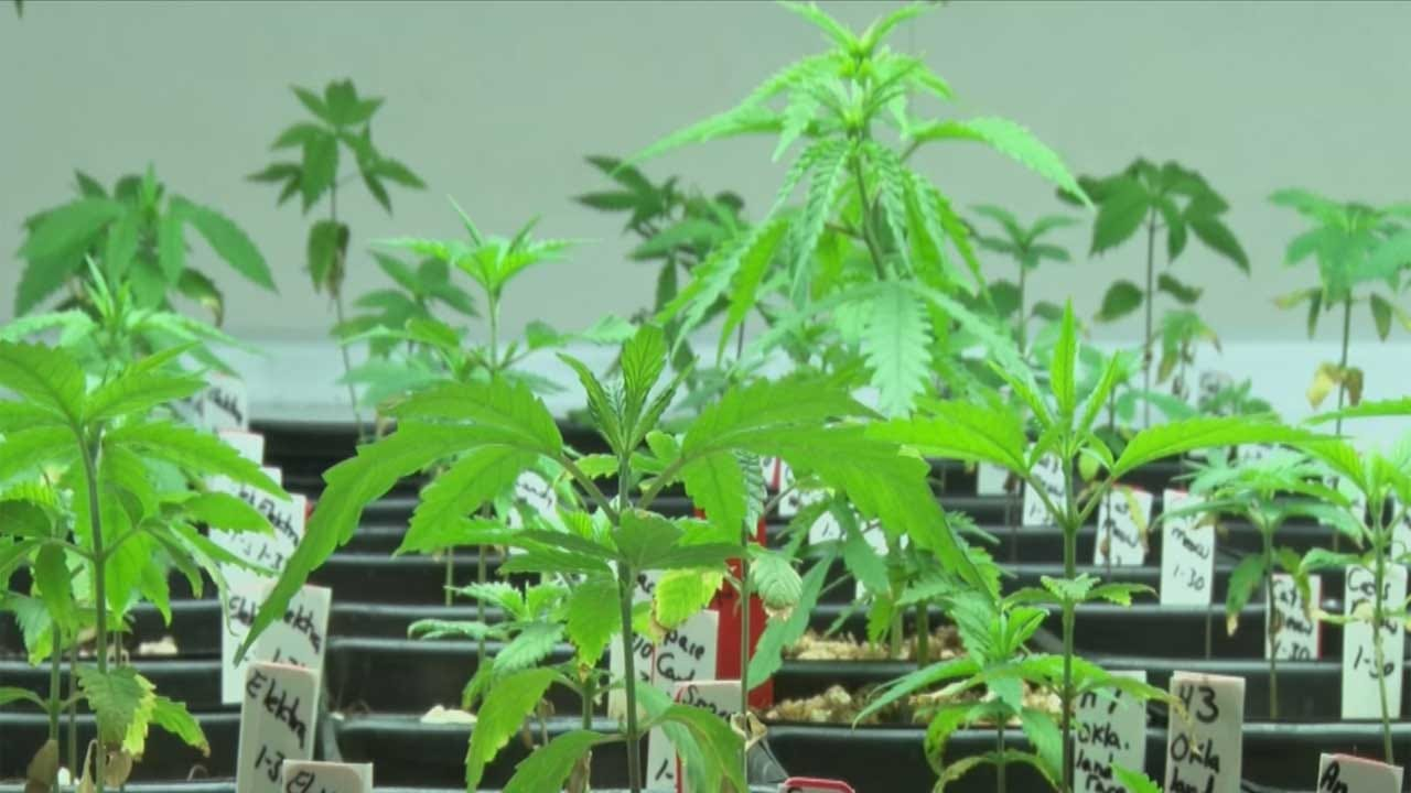 House Committee Passes Bill To Regulate Penalties Concerning Marijuana Possession