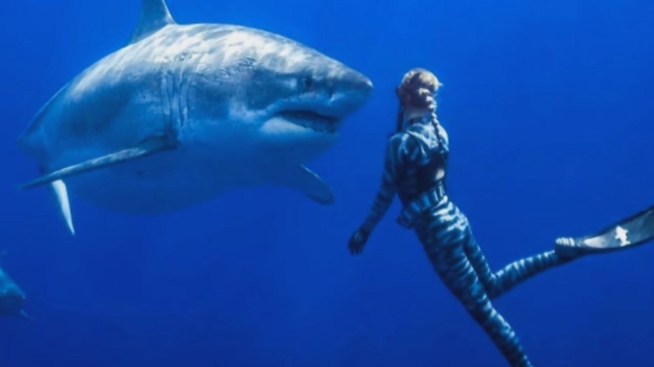 Huge Female Great White Shark With Twitter Following Resurfaces