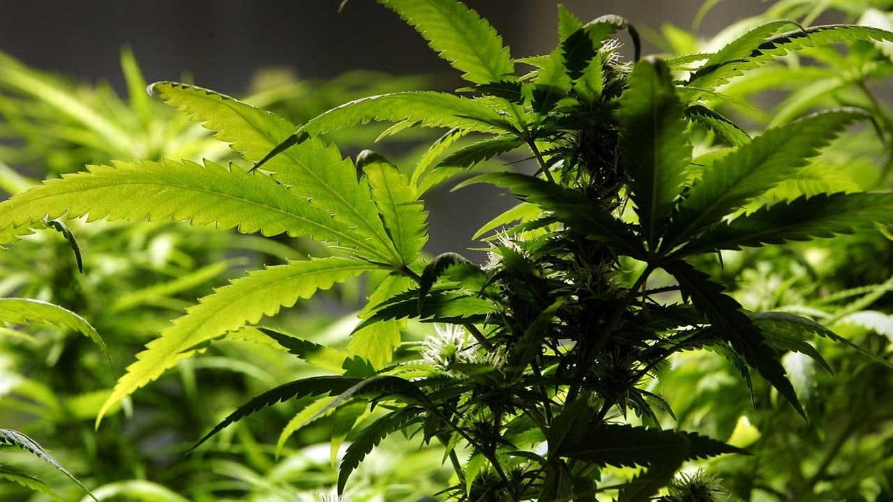 OBNDD Seizes Marijuana At Norman Dispensary
