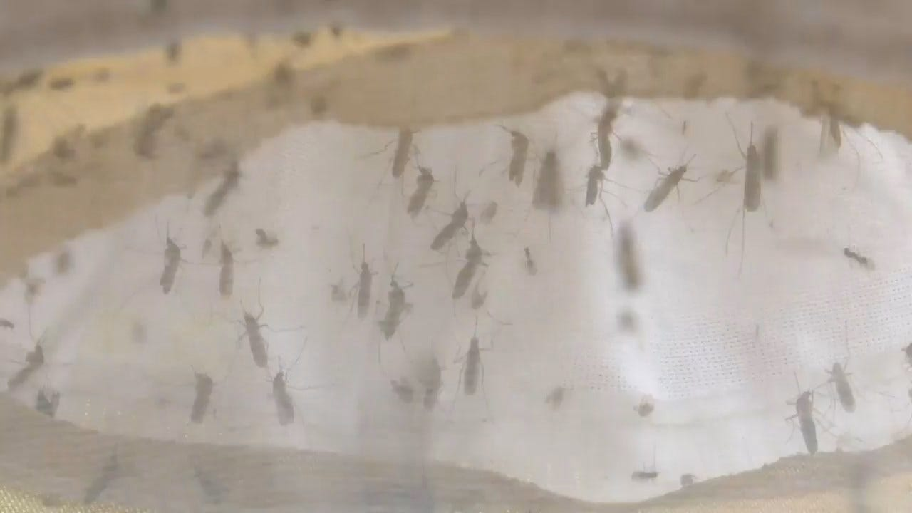 Michigan Sounds Alarm On Mosquito-Borne Virus After 3 Deaths