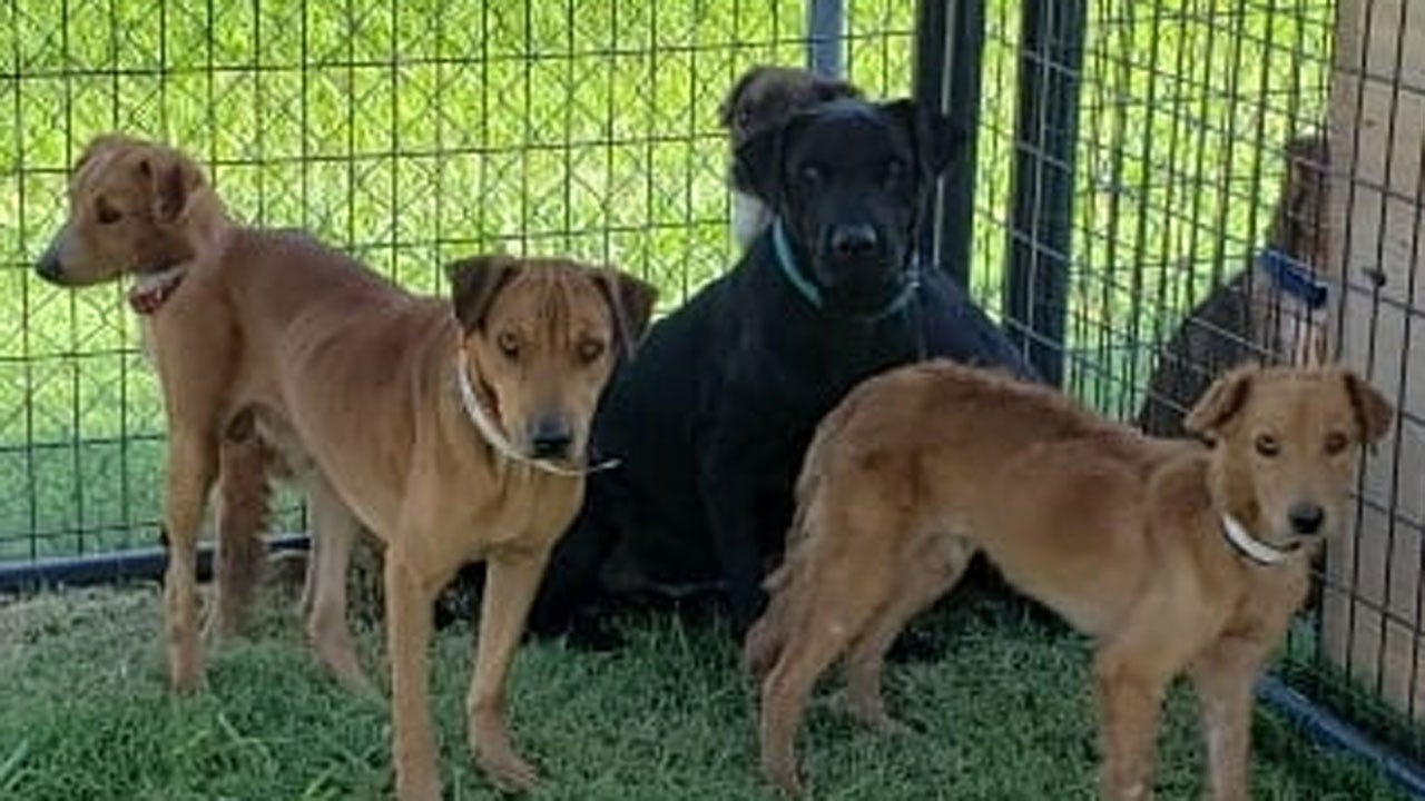 Ponca City Humane Society Seeking Donations For Rescue Dogs